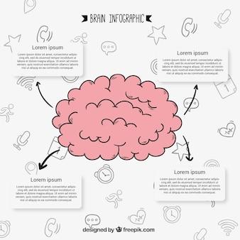 Von hand gezeichnet infografik des menschlichen gehirns