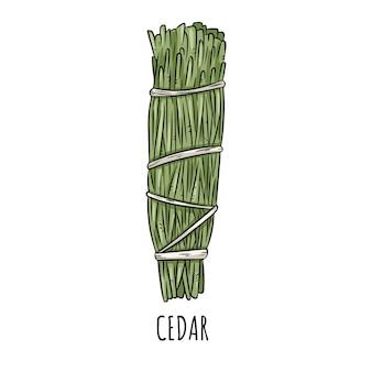 Von hand gezeichnete gekritzel lokalisierte illustration des weisen flecks stock zedernkraut-bündel