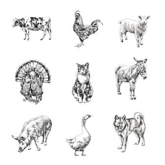 Von hand gezeichnete skizzen der tiere