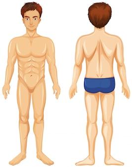Vorder- und rückseite des menschlichen mannes