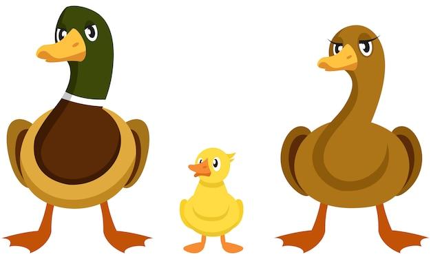 Vorderansicht der entenfamilie. zuchtvögel unterschiedlichen geschlechts und alters.