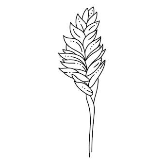 Vriesea tropical flower im trendigen minimalistischen liner-stil. vector floral illustration zum drucken auf t-shirts, webdesign, karten, postern, erstellen eines logos und musters
