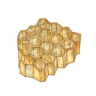 Wabe isoliert. sechseckige prismatische wachszellen, die von bienen zur lagerung von honig gebaut wurden