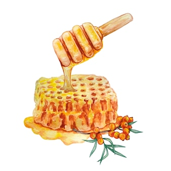 Wabe mit honig und einem zweig sanddorn