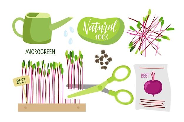 Wachsende pflanzen zu hause für eine gesunde ernährung mikrogrüne samenpackung rübensamen frische kleine pflanzen