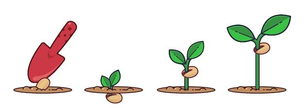 Wachsende pflanzenstadien samen sprießen und blühen gewachsene pflanze flache karikaturillustration der pflanze
