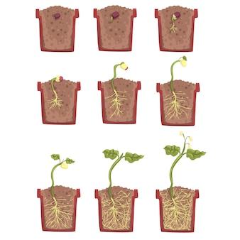 Wachstum, entwicklung und wurzelbildung von pflanzensamen im blumentopf, klassisches botanik-lehrbuch pädagogische infografik-illustration