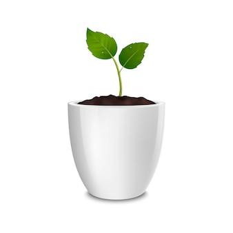 Wachstumskonzept. vorlage der realistischen symbol des sprosses in einem weißen blumentopf, isoliert auf weißem hintergrund