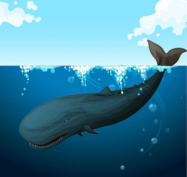 Wal, der unter dem meer schwimmt