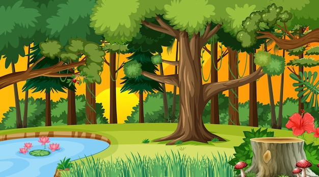 Wald bei sonnenuntergang landschaftsszene