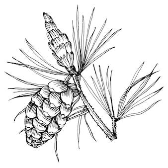 Wald herbst und winter natur. fichtenzweige, eicheln, tannenzapfen, herbstblätter. isoliertes abbildungselement. handzeichnung wilde blume