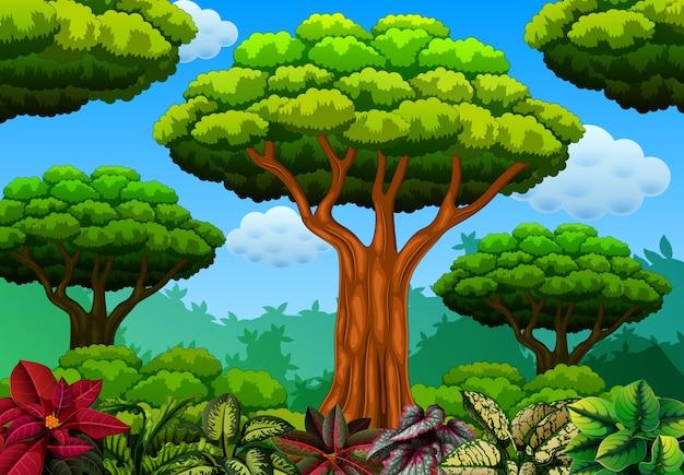 Wald mit etwas blume
