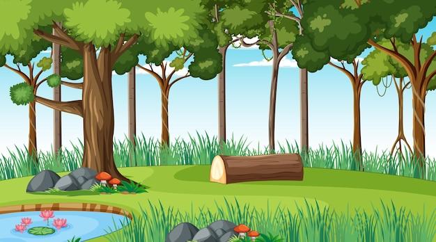 Waldlandschaftsszene tagsüber mit vielen verschiedenen bäumen different