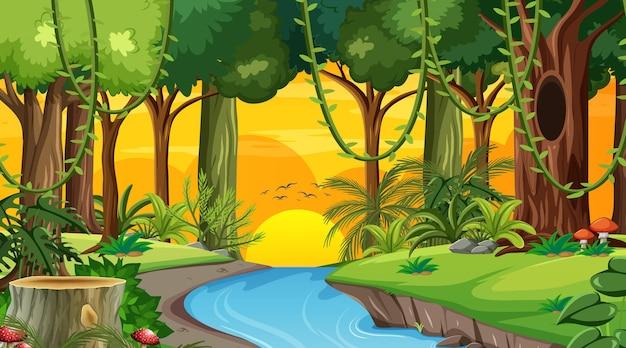 Waldlandschaftsszene zur sonnenuntergangszeit mit vielen verschiedenen bäumen