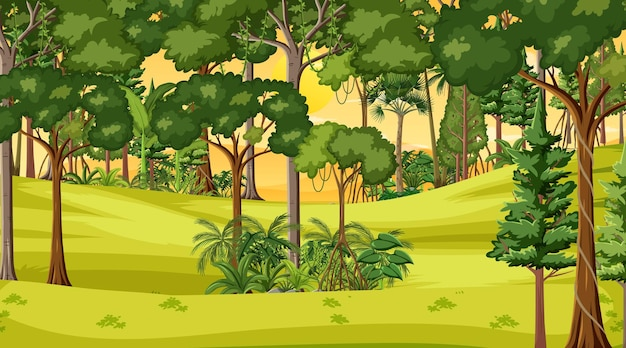 Waldlandschaftsszene zur sonnenuntergangszeit