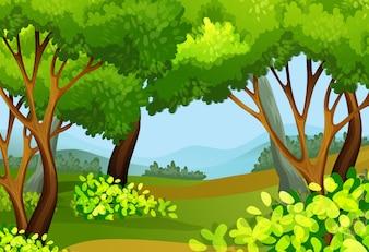 Waldszene mit hohen Bäumen