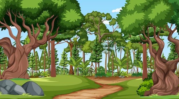 Waldszene mit verschiedenen waldbäumen Kostenlosen Vektoren