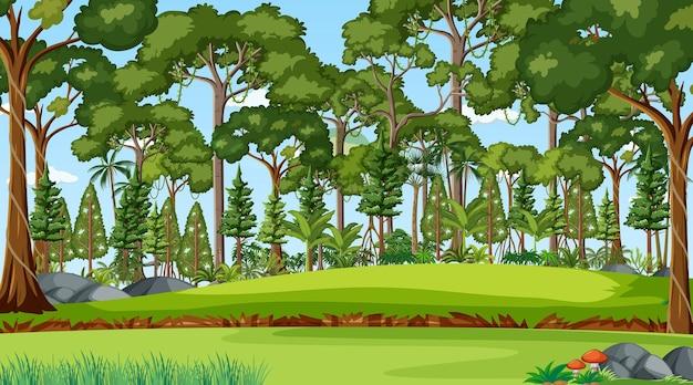 Waldszene mit verschiedenen waldbäumen