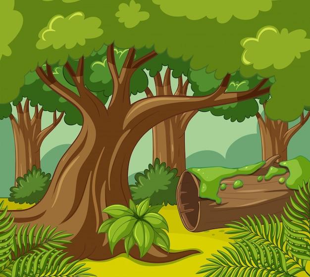 Waldszene mit vielen bäumen