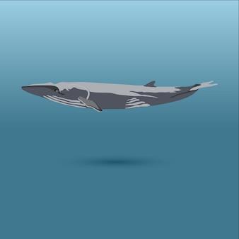 Wale aus der welt / killer orca / pygmäensperma, bowhead, pygmy right, langflossiger pilot
