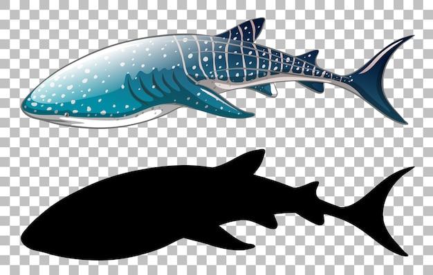 Walhai mit seiner silhouette auf transparent