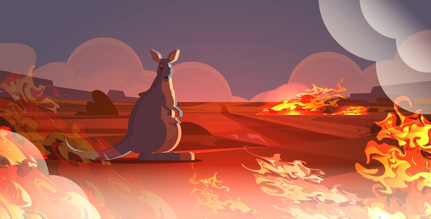 Wallaby mit dem baby, das von den bränden in australien-tieren sterben in den intensiven orange horizontalen flammen des waldbrand-naturkatastrophenkonzeptes entgeht