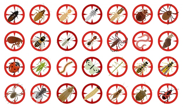 Wanze der gesetzten ikone der insektenvektorkarikatur vektorillustrations-insektenkäfer. lokalisierte karikaturikonenwanze und fliegenkäfer.
