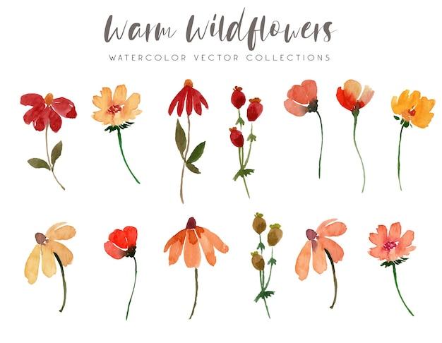 Warme wildblumen-aquarell-sammlung