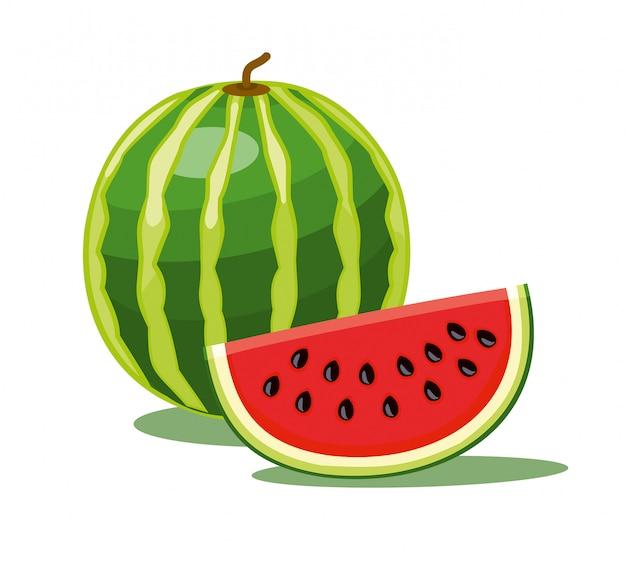 Wassermelone lokalisiert auf weißem hintergrund. illustration.