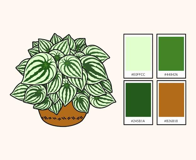 Wassermelone paperomia leaf set vektor-illustration