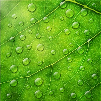 Wassertropfen auf grünem blattmakrohintergrund