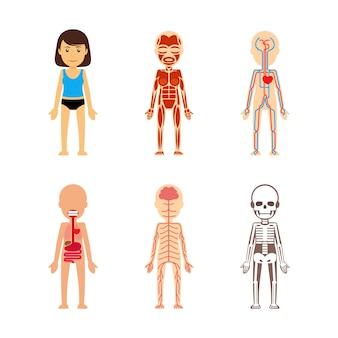Weibliche körper anatomie