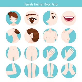 Weibliche menschliche äußere organe body set