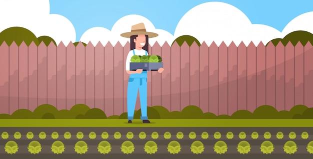 Weiblicher landwirt, der kasten mit grüner frischer salatkohlfrau erntet, die gemüse-landarbeiter in einheitlichem öko-landwirtschaftskonzept hinterhof-ackerlandhintergrund in voller länge erntet