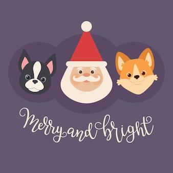Weihnachtsmann mit zwei welpen: welsh corgi und boston terrier