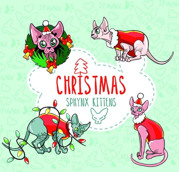 Weihnachtssphynx-kätzchen