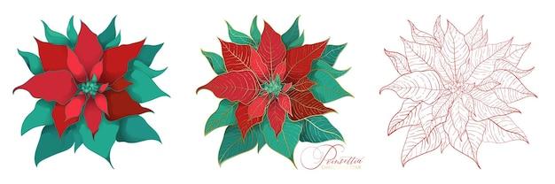 Weihnachtssternblüten im eleganten deko-stil