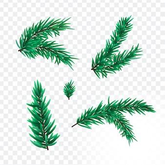 Weihnachtstannenbaumaste lokalisiert auf transparant hintergrund