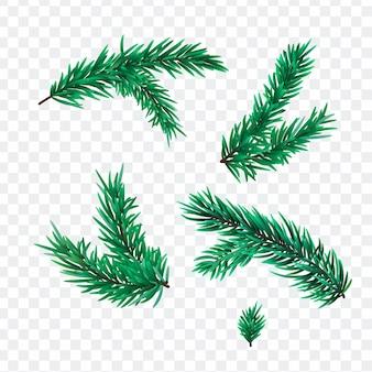 Weihnachtstannenbaumzweige lokalisiert