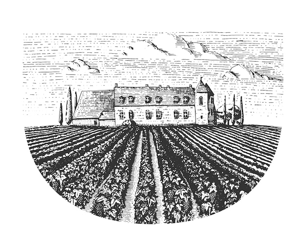 Weinlese gravierte, handgezeichnete weinberglandschaft, stoßzahnfelder, alt aussehendes scratchboard oder tätowierungsstil