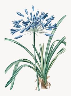 Weinlese-illustration der afrikanischen lilie