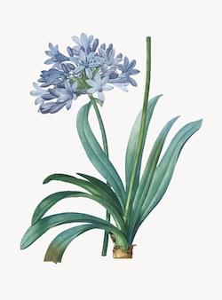 Weinlese-illustration der lilie des nils