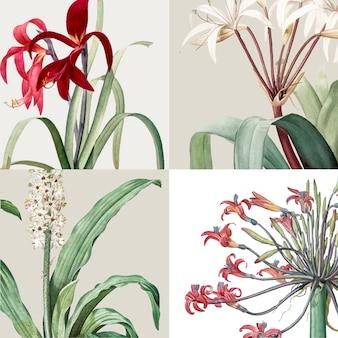 Weinlese-illustration des satzes der lilie