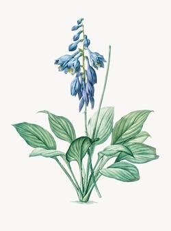 Weinlese-illustration von daylily