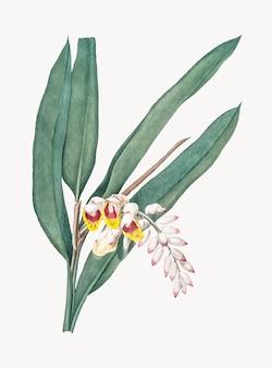 Weinlese-illustration von shellflower