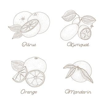 Weinlese-zitrushand gezeichneter satz lokalisiert auf weiß