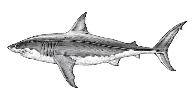 Weinlesegravurillustration der hand des weißen haifischs