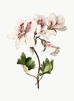 Weinleseillustration der niederlassung von azaleen in der blüte