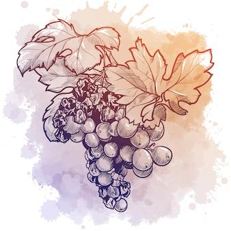 Weintraube mit blättern. lineare zeichnung isoliert auf aquarell texturiert