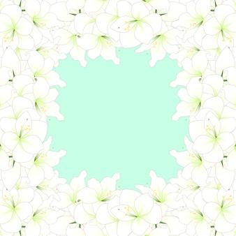 Weiße amaryllis-grenze